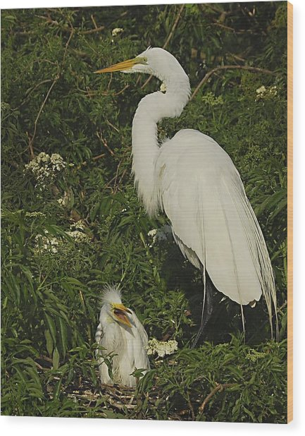 Mother And Baby Egret Wood Print by Wynn Davis-Shanks