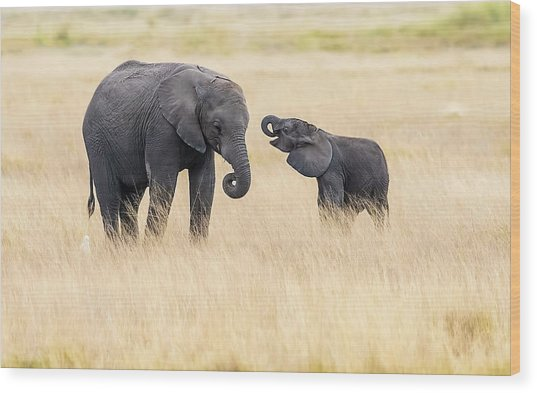 Mother And Baby Elephants Wood Print by Hua Zhu