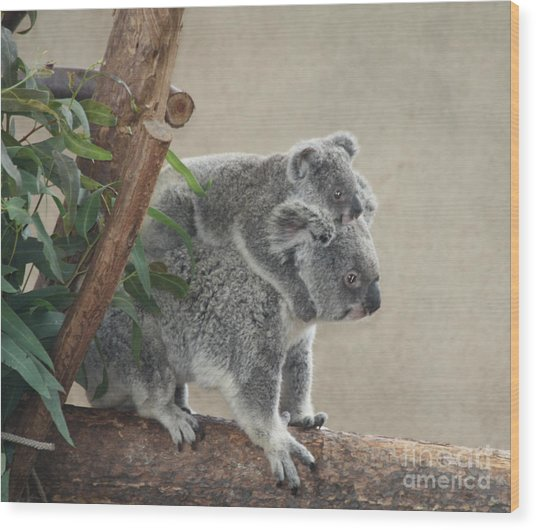 Mother And Child Koalas Wood Print