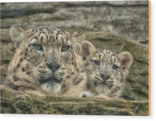 Mother And Cub Wood Print