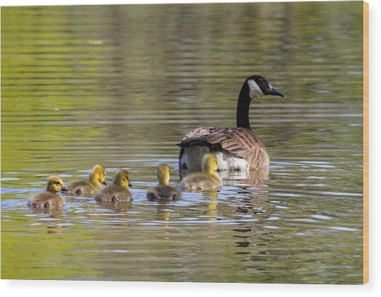 Mother Goose Wood Print