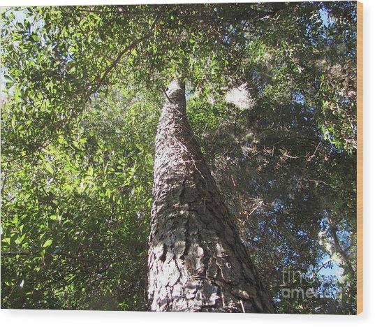 Mother Pine Wood Print