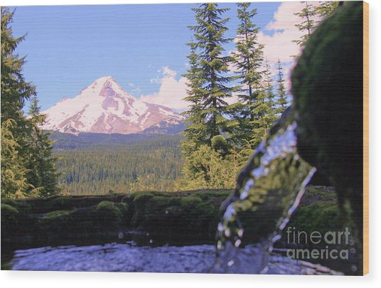 Mount Hood From Buzzard Point Wood Print by Cari Gesch