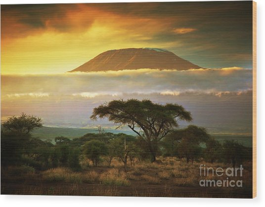 Mount Kilimanjaro Savanna In Amboseli Kenya Wood Print
