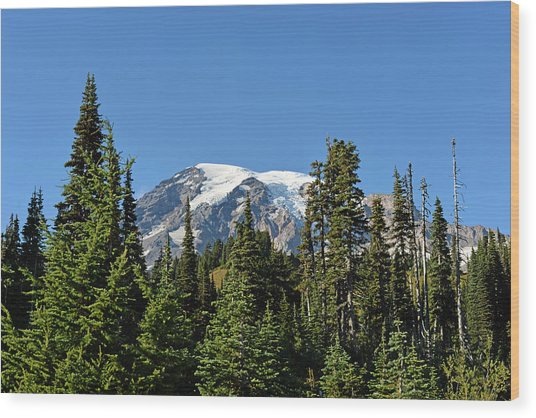 Mount Rainier Evergreens Wood Print