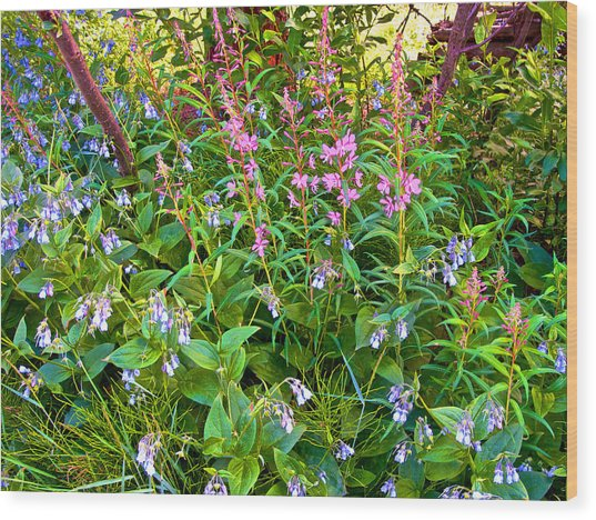 Mountain Bluebells And Tall Fireweed By Savage River Cabin In Denali Np-ak Wood Print