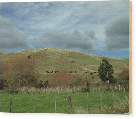 Mountain Cattle Wood Print by Ron Torborg