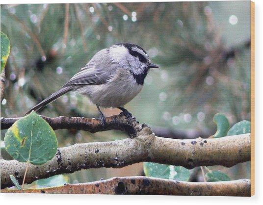 Mountain Chickadee On A Rainy Day Wood Print