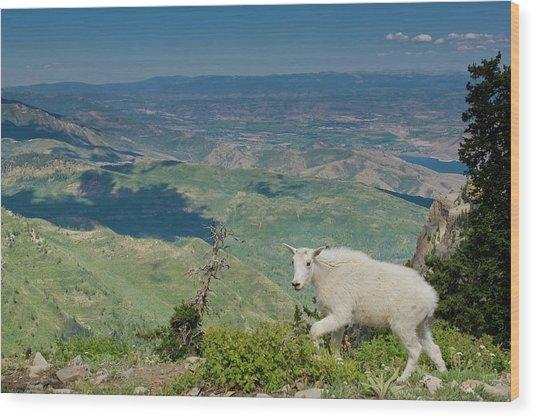 Mountain Goat, Oreamnos Americanus Wood Print by Howie Garber