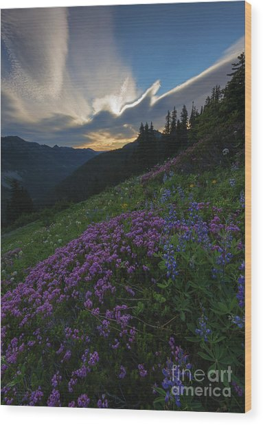 Mountain Heather Dawn Wood Print