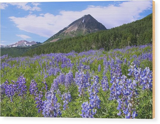 Mountain Lupine Meadow Wood Print