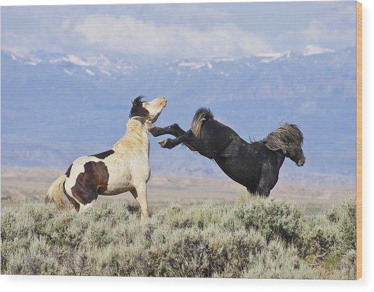 Mountain Mustangs Wood Print