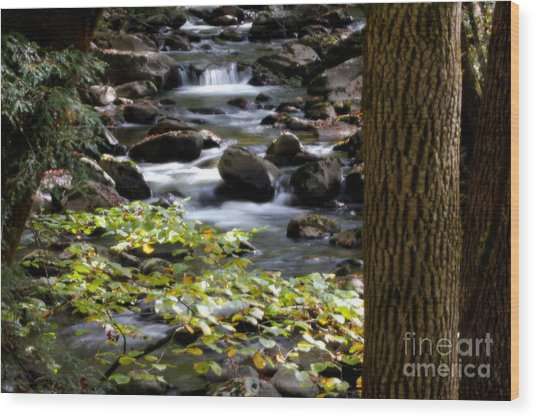 Soothing Mountain Stream In The Smoky's Wood Print