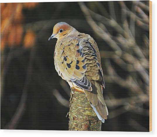 Mourning Dove On Post Wood Print