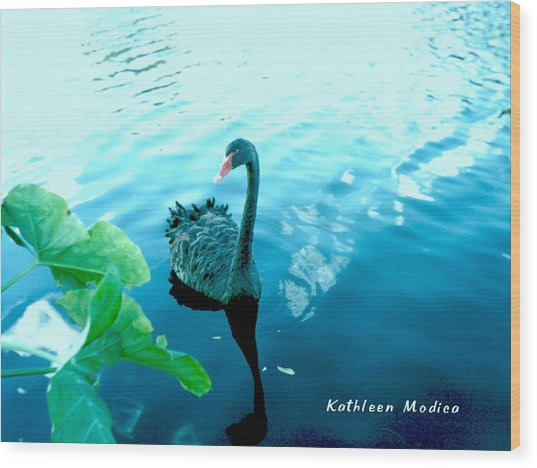 Mourning Swan Song Wood Print