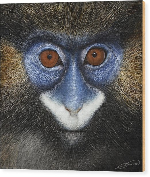 Moustached Guenon 2 Wood Print by Owen Bell