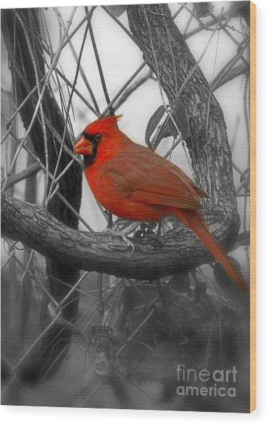 Mr Cardinal -card Wood Print