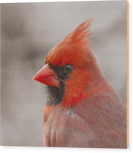 Mr Cardinal Portrait Wood Print