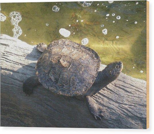 Mr Camaflauged Turtle Wood Print