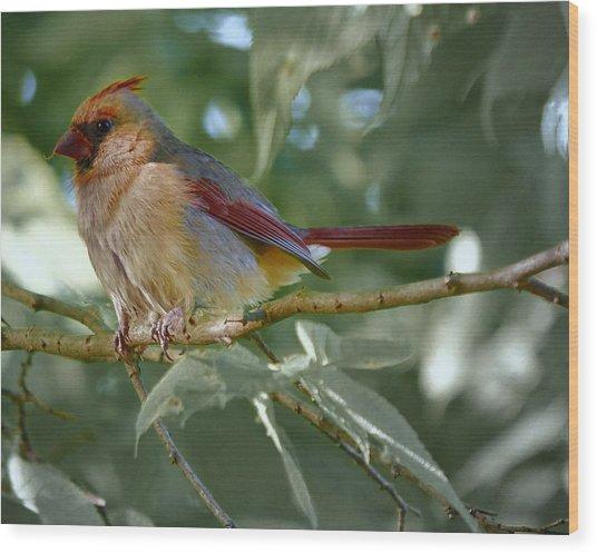 Mrs. Cardinal Wood Print