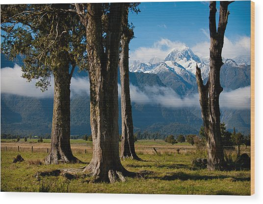Mt Cook Through Trees Wood Print