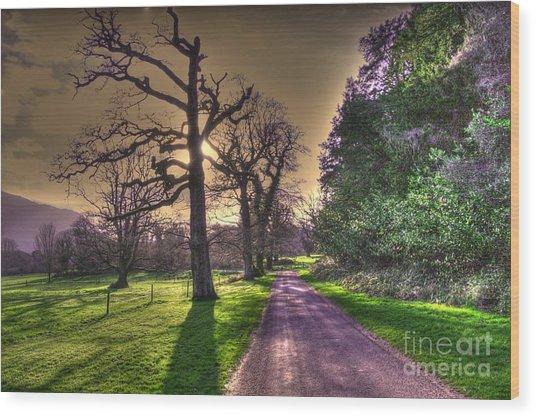 Muckross Park Kerry Ireland Wood Print by Jo Collins