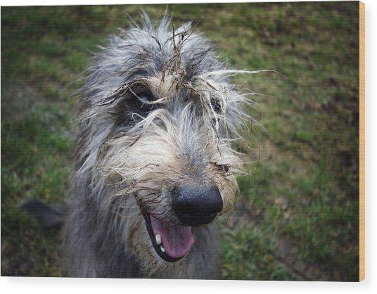 Muddy Dog Wood Print
