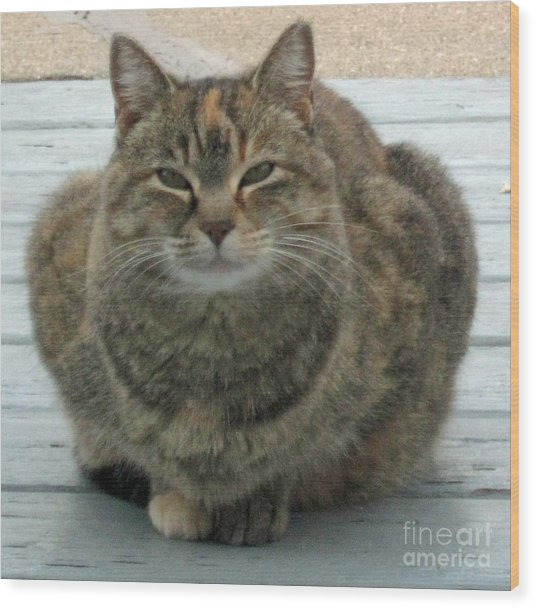 Muffin The Feral Cat Wood Print