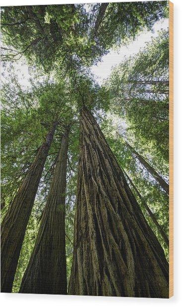 Muir Woods I Wood Print