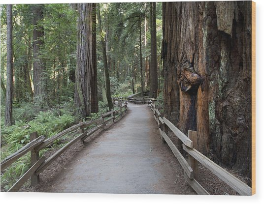 Muir Woods National Park Service Wood Print