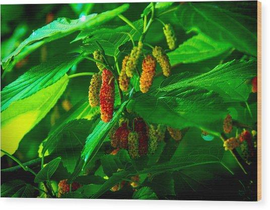 Mulberries - Fruit - Berries Wood Print by Barry Jones