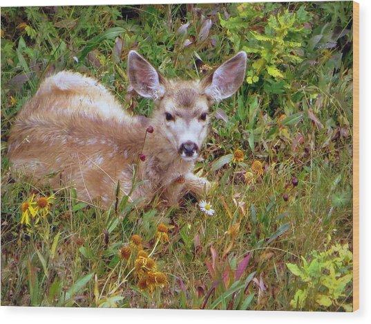Mule Deer Fawn Wood Print