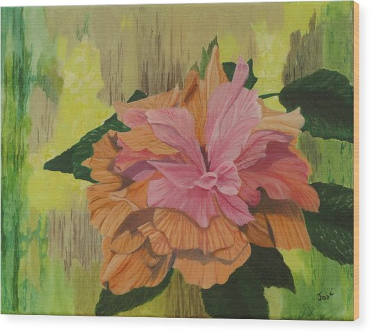 Multi-petaled Pink Peach Hibiscus Wood Print by Hilda and Jose Garrancho