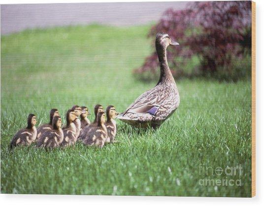 Mumma Duck And Kids Wood Print