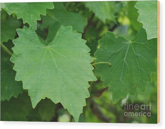 Muscadine Leaves Wood Print by Gayle Melges