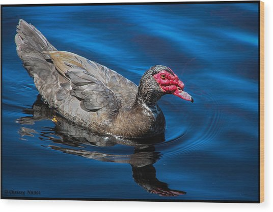Muscovy Duck Wood Print by Christine Nunes