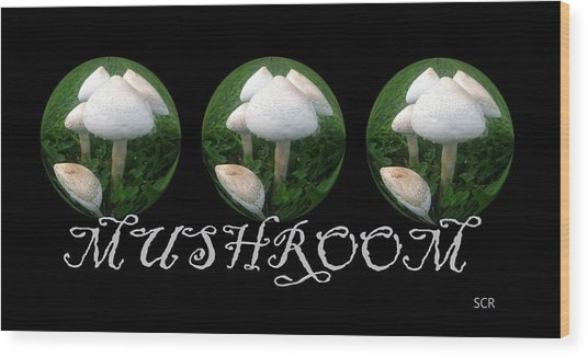 Mushroom Art Collection 2 By Saribelle Rodriguez Wood Print