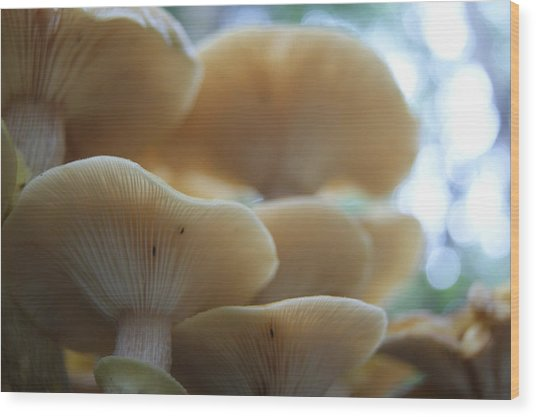 Mushroom Canapy Wood Print by Anne Williamson