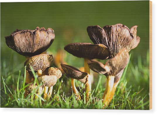 Mushroom Time Wood Print by Pedro Nunez