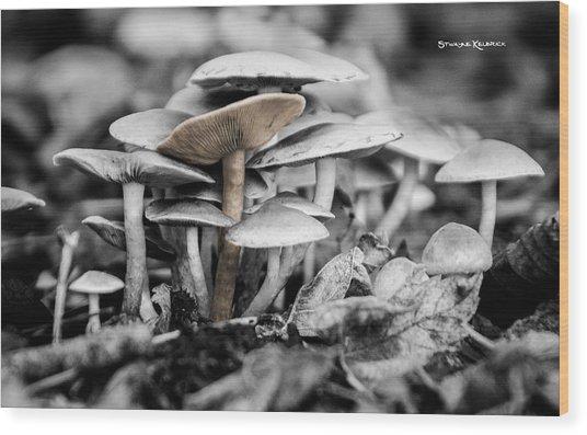 Wood Print featuring the photograph Mushrooms by Stwayne Keubrick
