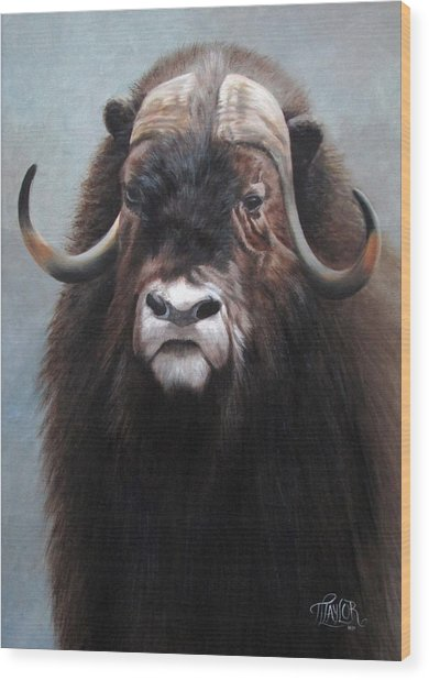 Musk Ox Wood Print