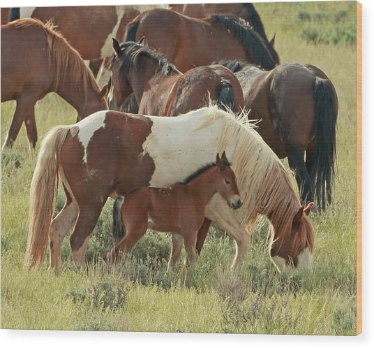 Mustang Baby Wood Print by David  Treick
