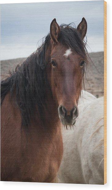 Mustang Beauty  Wood Print