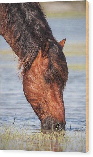 Mustang Feeding In The Marsh Wood Print