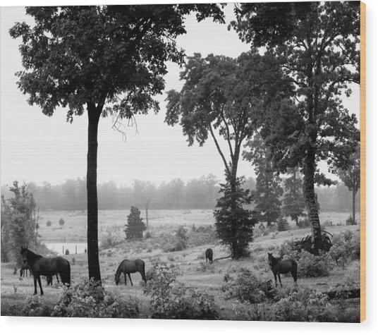 Mustangs Wood Print by Randy Davidson