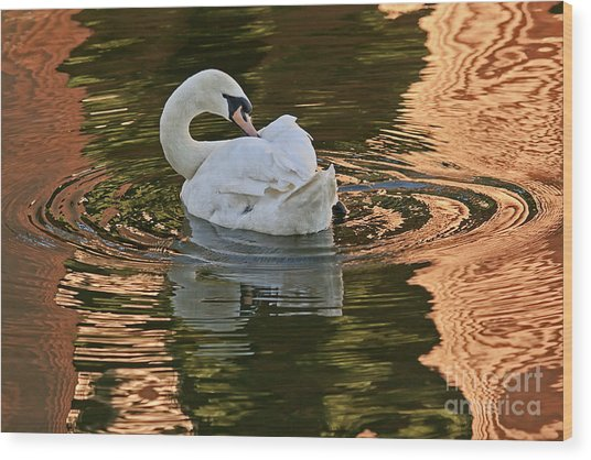 Wood Print featuring the photograph Preening by Kate Brown