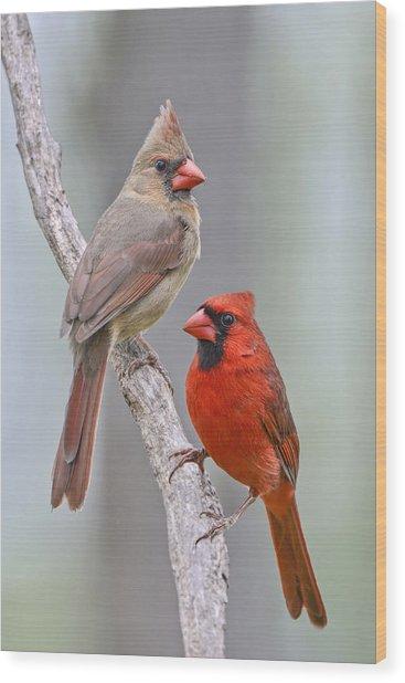 My Cardinal Neighbors Wood Print