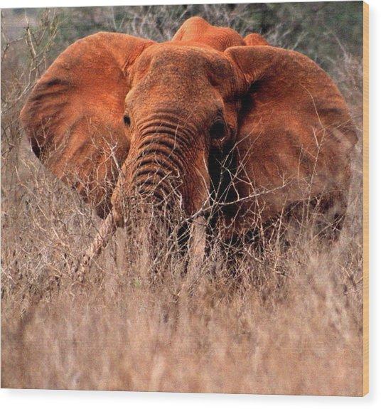 My Elephant In Africa Wood Print