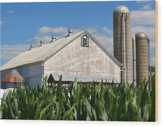 My Favorite Barn In Summer Wood Print