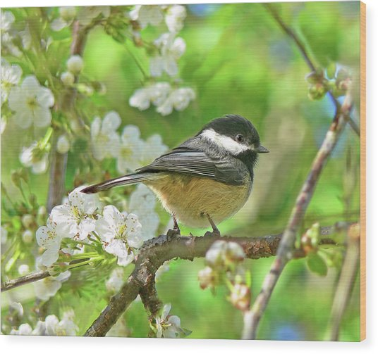 My Little Chickadee In The Cherry Tree Wood Print